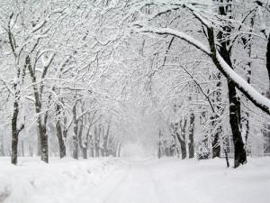White Winter Hymnal - Fleet Foxes; vocal arrangement; choir satb, piano, guitar, bass, drums; bladmuziek; sheet music; koorarrangement; koor; lyrics; chords