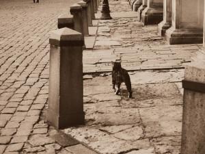 Stray Cat Strut - Stray Cats; vocal arrangement; choir satb a cappella; bladmuziek; sheet music; koorarrangement; koor; lyrics; chords